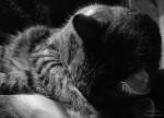 Kater, schlafend